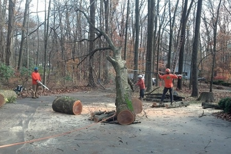 Tree Removal Photos